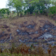 Burnt Rainforest