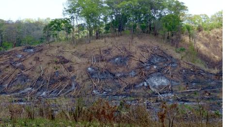 Burnt Rainforest